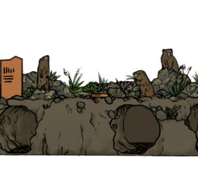 sketch of small diorama showing marmots