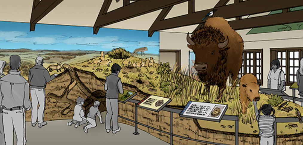 Sketch of diorama with bison